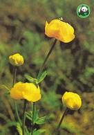 Flowers - Fleurs - Bloemen - Blumen - Fiori - Flores - Globe Flower - (Trollius Europaeus) - WWF Panda Logo - Fleurs