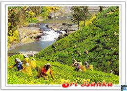 Sri Lanka Postcards, Tea Pluckes, Postcrossing - Sri Lanka (Ceylon)