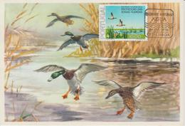 Portugal Carte Maximum Oiseaux 1976 Canards 1318 - Cartoline Maximum