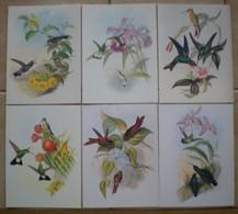 6 Cartes Postale Ouvrantes Neuves OISEAUX Illustrateur John GOULD - Contemporary (from 1950)