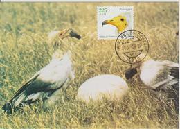 Portugal Carte Maximum Oiseaux 2001 Vautour 2468 - Cartes-maximum (CM)