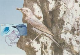 Portugal Carte Maximum Oiseaux 2003 Monticole 2627 - Cartes-maximum (CM)