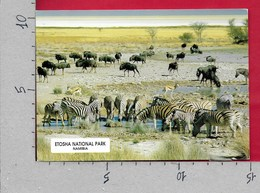 CARTOLINA VG NAMIBIA - ETOSHA National Park - Zebra - 10 X 15 - ANN. 1999 LEOPARD - Namibia