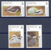 Ncw284s WWF FAUNA STORMVOGELS TROPIC BIRDS VÖGEL AVES OISEAUX BERMUDA 2001 PF/MNH - W.W.F.