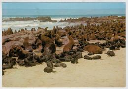 SWA     ROBBEN  AM  KREUZKAP  --SEALS  AT  CAPE-CROSS              (VIAGGIATA) - Sud Africa
