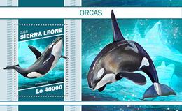 Sierra Leone. 2018 Orcas. (1106b) - Dauphins