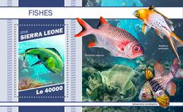 Sierra Leone. 2018 Fishes. (1101b) - Poissons