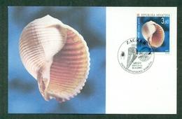 """CM-Carte Maximum Card # Croatie-Croatia  1997 # Fauna - Coquillages,Muscheln,shells,skolijke """"Tonna Galea"""" - Croatia"""