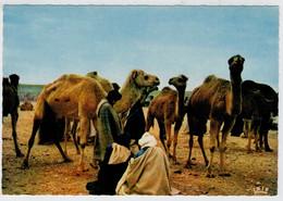 SCENES  ET TYPES    GOULIMINE                       (NUOVA) - Marocco