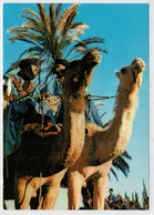 SCENE  DU  DESERT  MAROCAIN                     (NUOVA) - Marocco