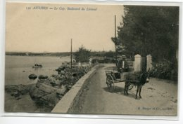 06 ANTIBES Carte Rare Paysan Attelage Ane Cariole  Le Cap Boulevard Du Littoral 1910   /ES 2014 - Antibes