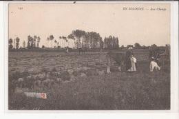 41 Ou 45 En Sologne Aux Champs Paysanne Vache Chevre Ane Goat Attelage - Unclassified
