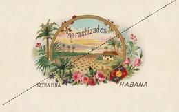 1893-1894 Grande étiquette Boite à Cigare Havane LA TACONIA - Etiquettes