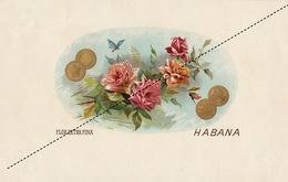 1893-1894 Grande étiquette Boite à Cigare Havane LA FERIADA - Etiquettes