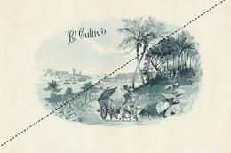 1893-1894 Grande étiquette Boite à Cigare Havane EL CULTIVO - Etichette
