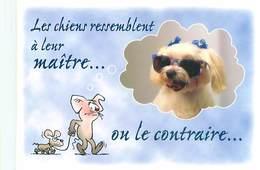 Humour Souris Chien      B 795 - Humour