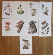 Thème Champignons - Lot De 9 Fiches Illustrées Format 27 X 19 Cm - Fiches Illustrées