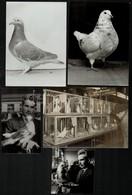 Galambászat, 5 Db Fotó, 10×9 és 17,5×13 Cm Közötti Méretekben - Autres Collections
