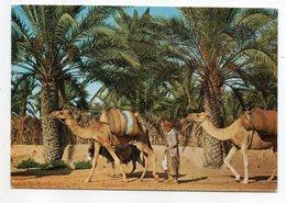 Tunisie--GABES--1969--Scène De Palmeraie--La Caravane  (animée ,chameaux, âne ) - Tunesië