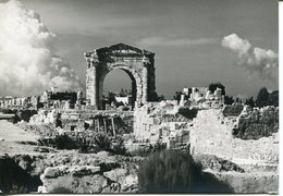 Liban Lebanon  Sour TYR Roman Greck And Arab Ruins Carte Photo Varoujan Sétian - Liban