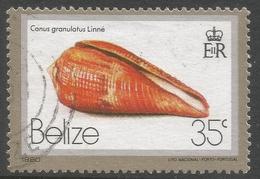 Belize. 1980 Shells. 35c Used SG 541 - Belize (1973-...)
