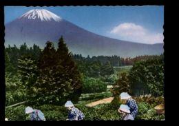 C446 JAPAN - SCENES COSTUMES FOLKLORE - SCENE PICKING THE GREEN TEA LEAVES IN SHIZUOKA PREFECTURE - Giappone