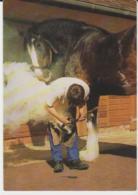 Postcard - Courage Shire Horse Centre, Maidenhead - Unused Very Good - Ansichtskarten