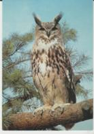 Postcard - Birds - European Eagle Owl Card No.3368 - Unused Very Good - Ansichtskarten