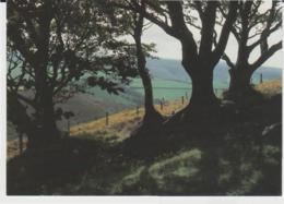 Postcard - Old Beech Hedge On The High Moor No Card No - Unused Very Good - Ansichtskarten