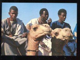 CPM Sénégal Chameliers De La Région Du Fleuve - Sénégal