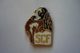 20190117-2433 SCF – SPANIELS CLUB DE FRANCE – CHIEN COKER - Animals