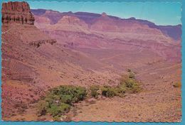 Indian Garden -- Grand Canyon National Park - Arizona - Etats-Unis