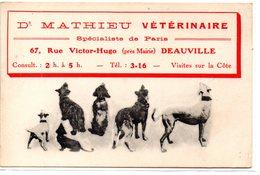Calvados : Deauvill : Dr Mathieu, Vétérinaire - Deauville