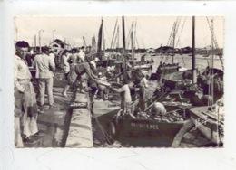Arrivée De La Sardine - Port De Croix De Vie (n°825 Jehly - Fishing