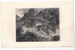 """Eau-forte, Delacroix, """"Tigre Surpris Par Un Serpent"""" -Ch. Courtry - Autres"""