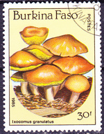 Burkia Faso -Schmerling (Ixocomus Granulatus) (Mi.Nr.: 1056) 1985 - Gest Used Obl - Burkina Faso (1984-...)
