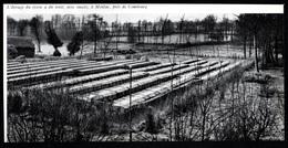 1965  --  ELEVAGE DE VISONS A MEILLAC   3Q429 - Non Classés