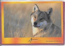57.- Parc Animalier De SAINTE-CROIX - Renard - Animales