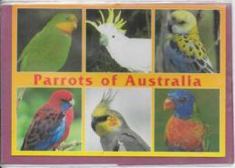 PARROTS OF  AUSTRALIA - Australie