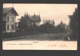 Liège - Avenue Des Ormes - Dos Simple - 1905 - Liege