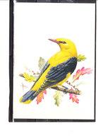 Buzin - Loriot - 1985-.. Oiseaux (Buzin)