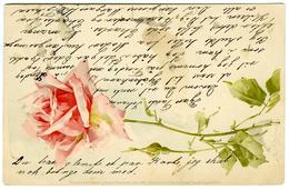 DENMARK : RIBE, 1901 : ROSES / NOCH SIND DIE TAGE DER ROSEN - Danemark