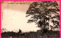 Sénégal - Guinée - Dans La Brousse - Boeuf - Bullock - Photo FORTIER - Sénégal