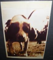 """Carte Postale - """"You're The Mess"""" (chien) Photo : Barry Weir - Publicité"""