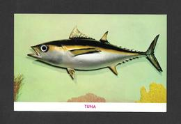 ANIMAUX - ANIMALS - POISSONS - FISH - TUNA - BY GULF STREAM CARD - Poissons Et Crustacés