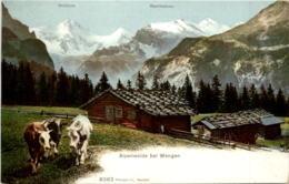 Alpenweide Bei Wengen - Cow - BE Berne