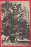 Guinée  - Conakry - Frômages Colossal à L'entrée De La Ville - 1922 ( Voir Verso ) - French Guinea