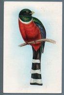 CP - OISEAU - TROGON MEXICANUS - Illustrateurs & Photographes