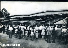 WD278 GOLIATH RIESENWAL 68000 KG GEFANGEN 1954 IN TRONDHEIM - Norvegia