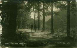 ROMANIA - SLANIC MOLDOVA - IN AMURG - FOTO WEISS-IASI - RPPC POSTCARD 1920s (BG2098) - Roumanie